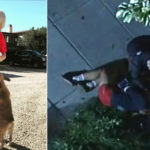 My Celebrity Life – Lady Gaga has offered a reward for the return of her two stolen French bulldogs Picture Lady GagaInstagramABC7