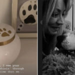My Celebrity Life – Kaley Cuoco gets beloved dog Normans ashes back after his death Picture Instagram