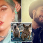 My Celebrity Life – Lady Gagas dogs have returned to safety after an attack where Ryan was shot Picture Lady GagaInstagram