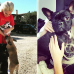 My Celebrity Life – Lady Gaga broke her silence after her dogs were stolen in LA